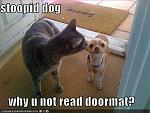 funny pictures cat dog doormat leave
