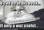 funny pictures cat useful idiots book