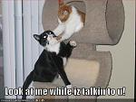 funny pictures cat chokes cat tree